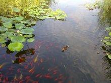 生态学 - 生物、生命系统与环境科学