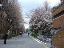 京都大学风景