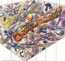 肝星状细胞