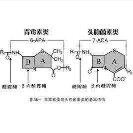 β-内酰胺
