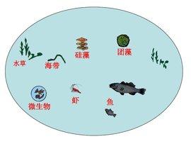 生态系统结构
