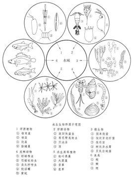 水生生物群落结构