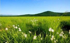 欧亚大草原