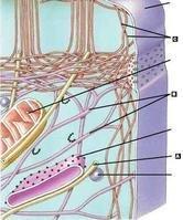蛋白质纤维