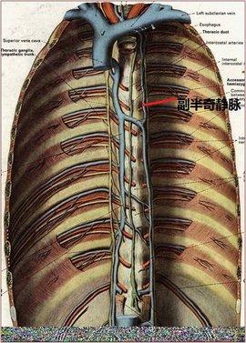 副半奇静脉