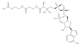 乙酰辅酶A