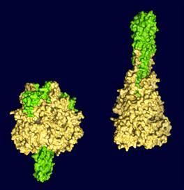 甲状腺球蛋白正常_左甲状腺素_360百科